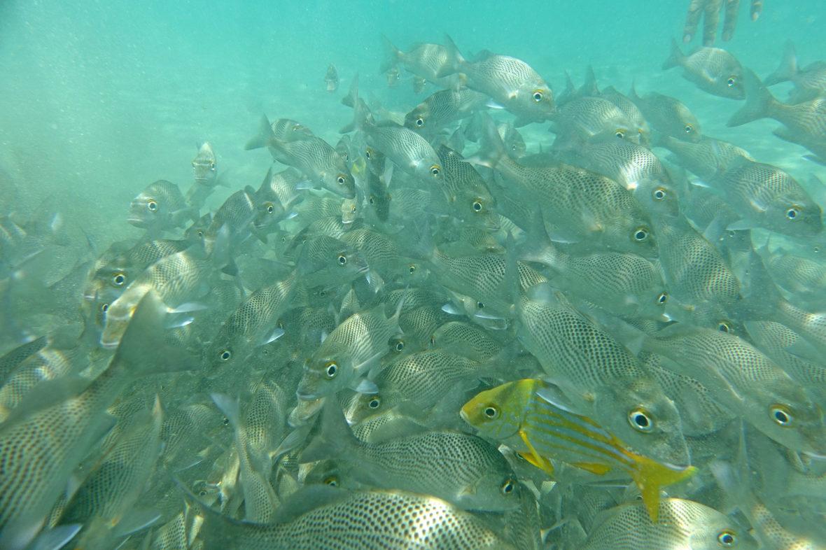 Porto Seguro, Brazil, Recife de Fora—a coral reef