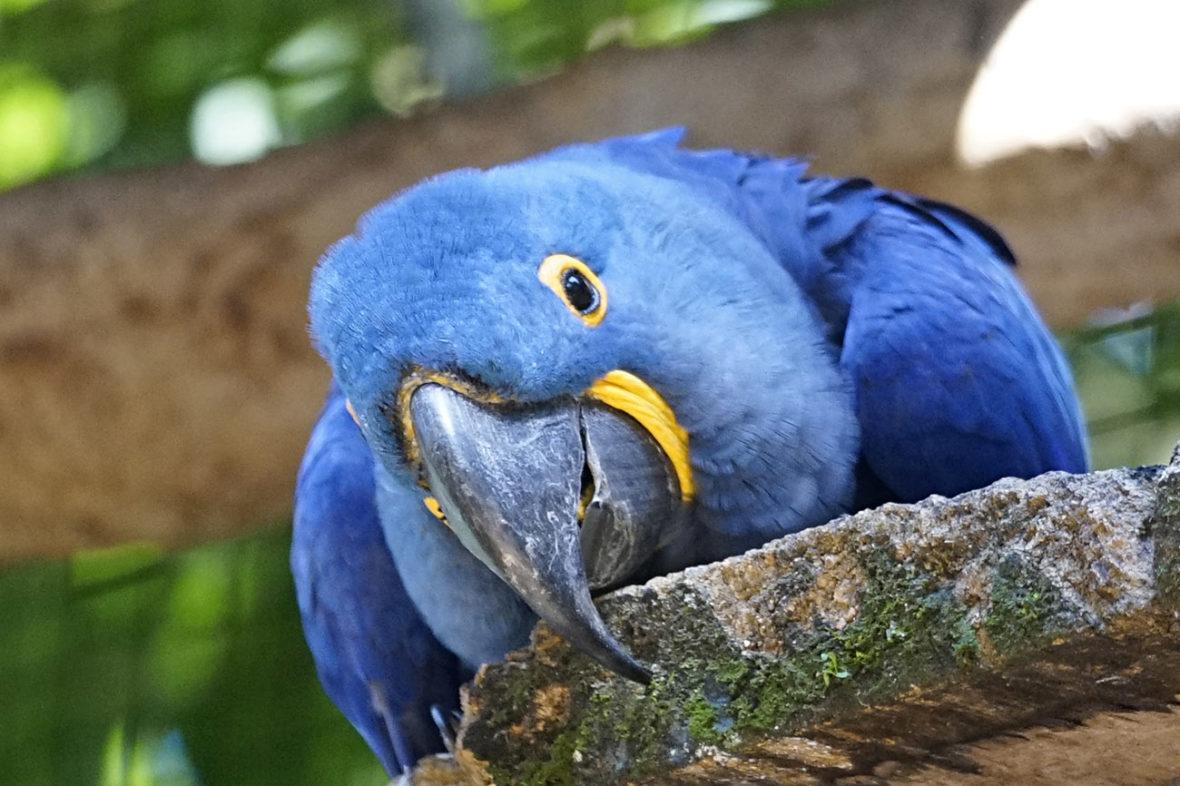 Parque das Aves, Brazil 2018