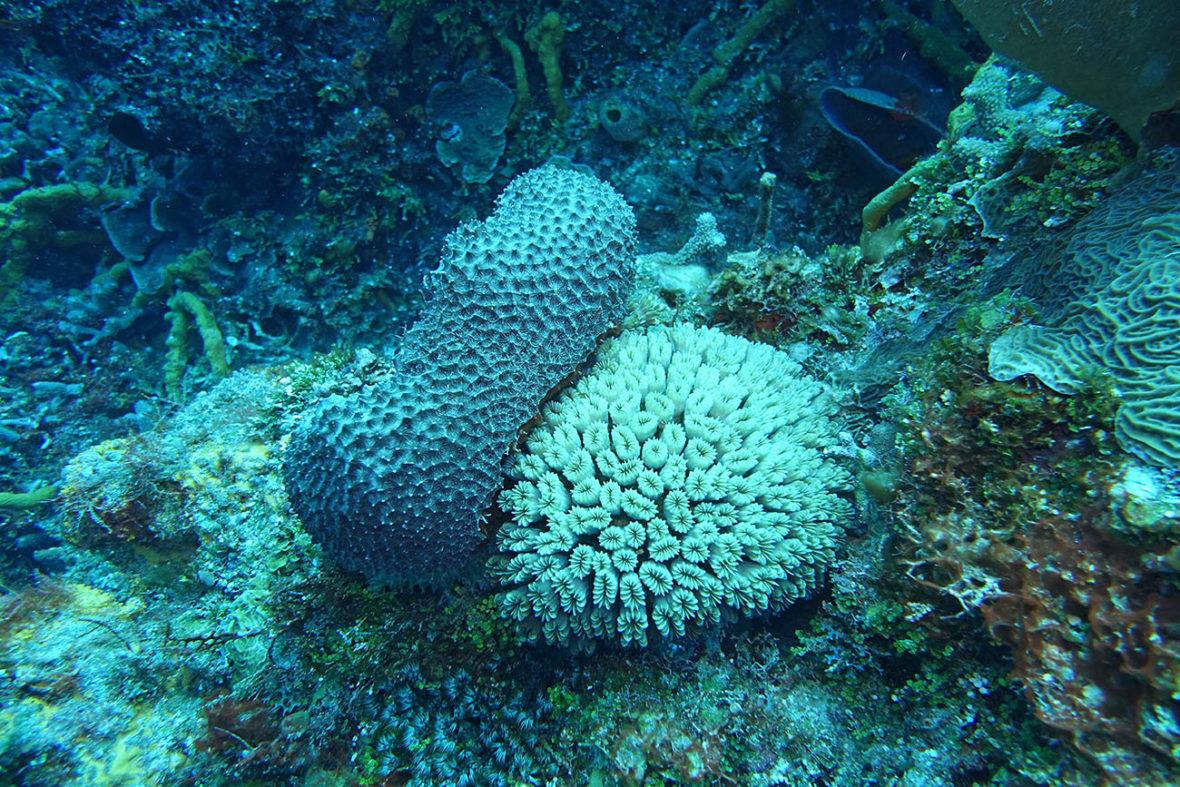 Palancar Gardens Reef, Barefoot Diving, Cozumel Diving
