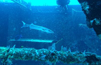 Felipe Xicotencatl Shipwreck, Barefoot Diving, Cozumel, Mexico