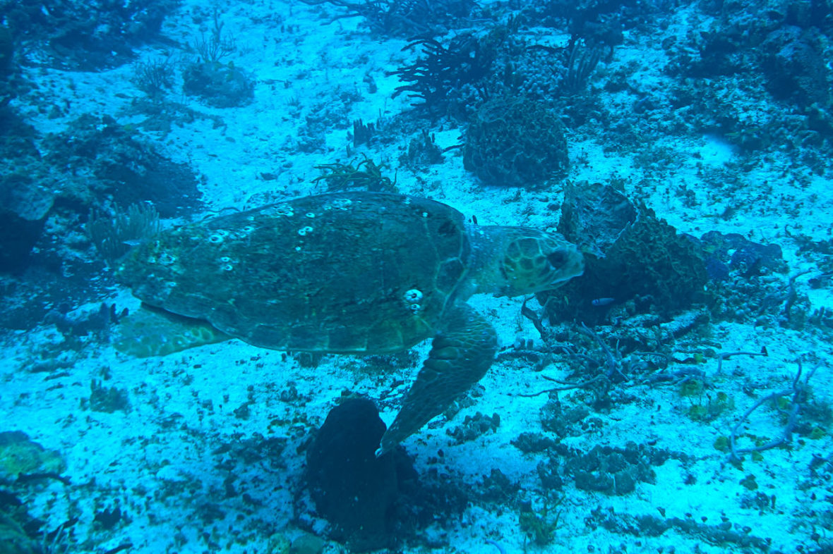 Plongee Grand Cozumel Diving, Scuba, Cozumel, Mexico