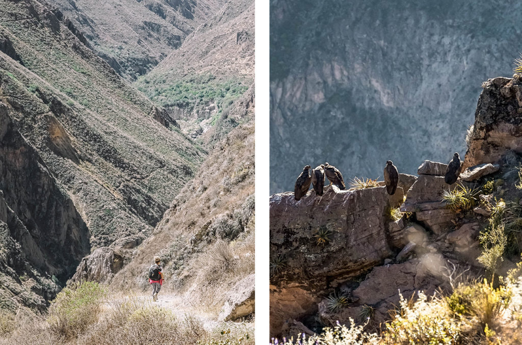 Colca Canyon, Peru, Travel Tips by NY See You Later